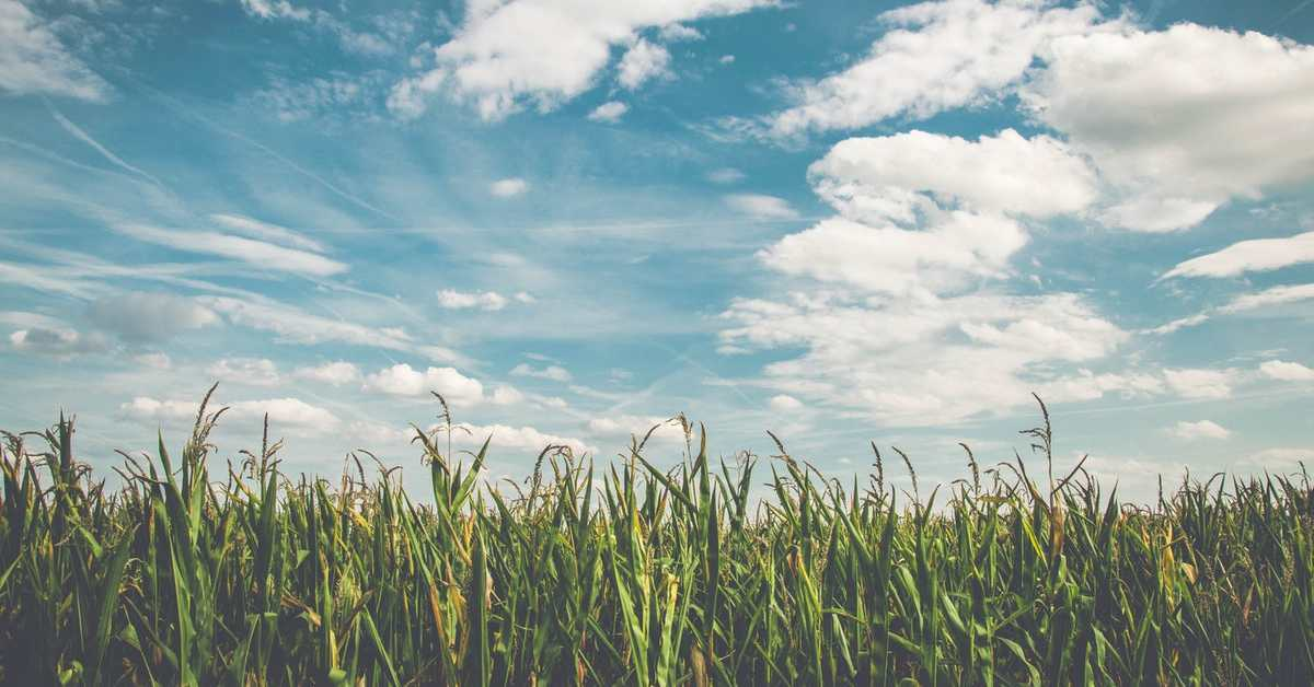 Kalsiyum Nitrat Gübresi Nedir? Ne Zaman Kullanılır?