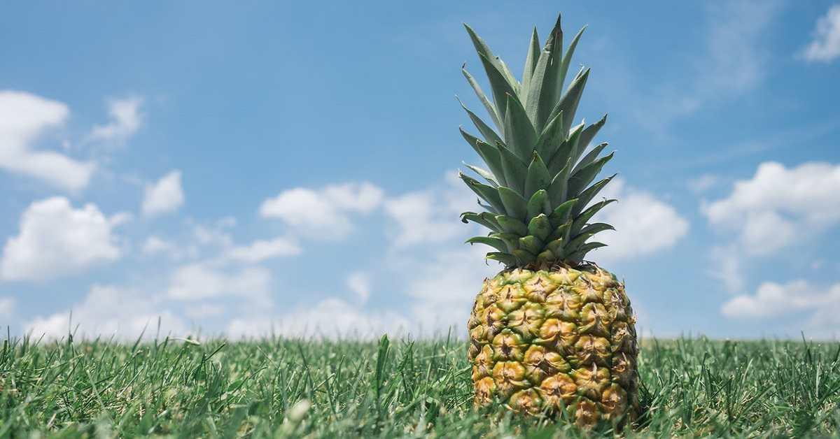 Ananas Yetiştiriciliği Nasıl Yapılır?