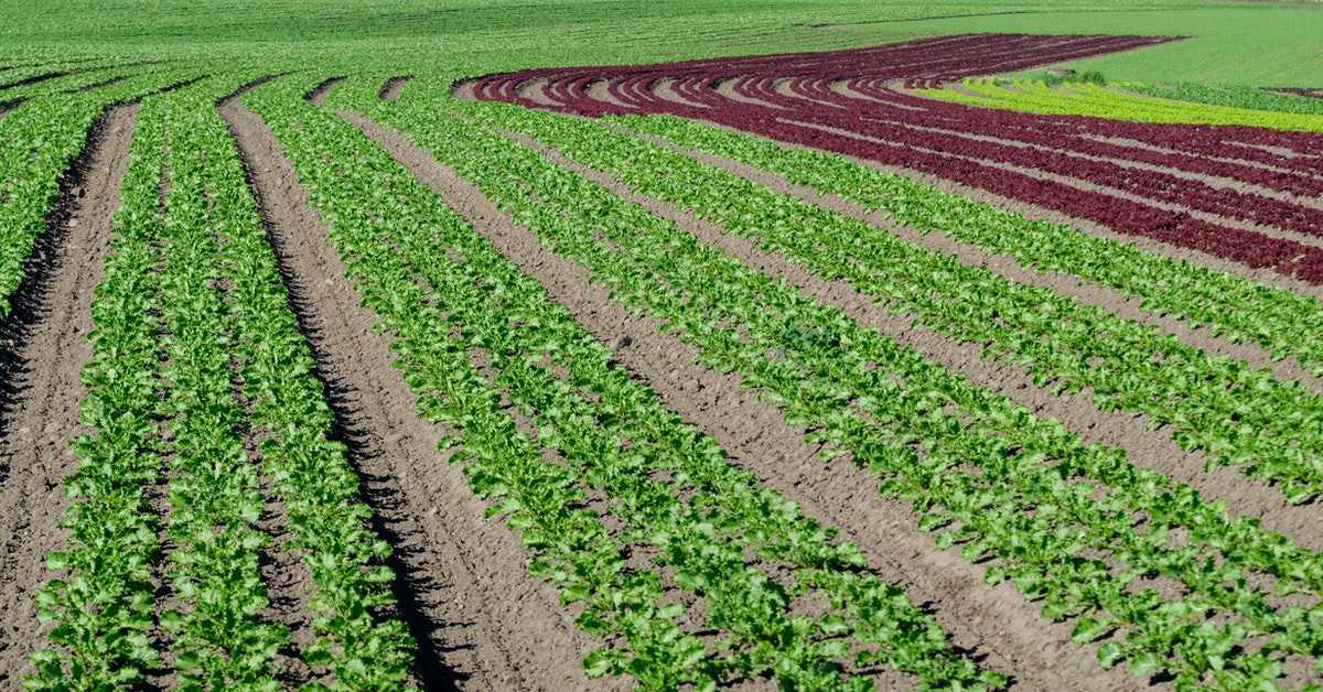 Organik Tarım Nedir, Organik Tarım Belgelendirmesi Nasıl Yapılır?